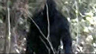 Bigfoot Video Willow Creek California