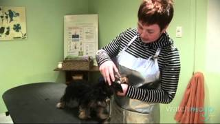 How To Take Care Of Your Dogs' Grooming Needs