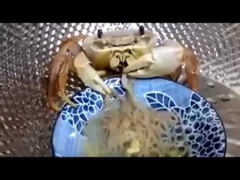 太奇妙了!螃蟹吃麵,竟然也吃的津津有味?