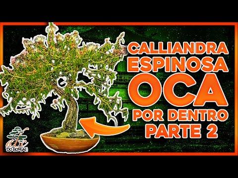 CALLIANDRA ESPINOSA OCA POR DENTRO PARTE 2 - AULA DE PROSPERIDADE FINAL  Continuação