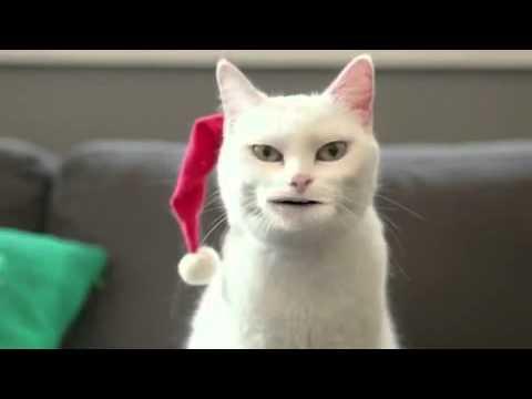 Katze singt geil