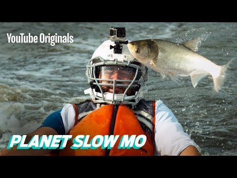 Flying Fish to the Face in Slow Motion - Thời lượng: 10:10.