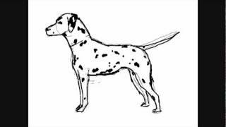 Comment dessiner videos cp fun music videos - Boxer chien dessin ...