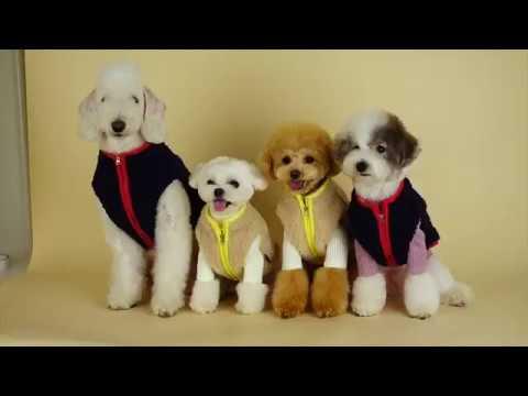 슈앤트리 강아지옷 겨울 신상 촬영 스케치! / dog pet clothes - Thời lượng: 82 giây.
