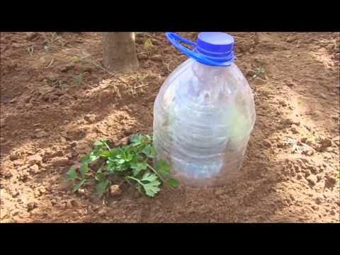 الري قطرة قطرة في حديقة المنزل