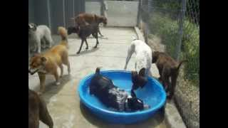 Puppies in the Pool at Canine Campus in Colorado Springs
