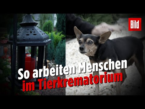 Arbeiten auf dem Tierfriedhof: »Für viele sind Haustie ...