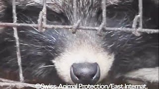 The latest in fur and fashion – and a COVID-19 connection by The Humane Society of the United States
