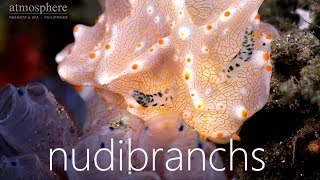 Nudibranchs at Atmosphere