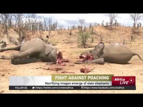 Horrifying images emerge of slain elephants in Zimbabwe