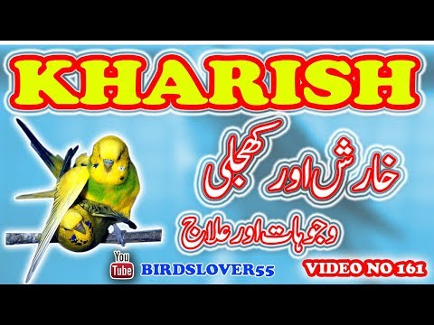 Birds Ko Kharish Q lagty Hay. Reasons & Treatment. why birds itch their skin. Video No. 161