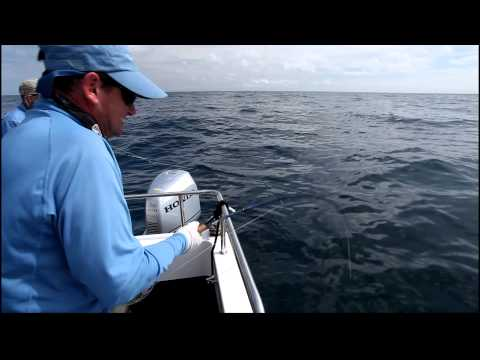 Video: Fly-fishing for sharks