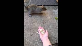 Woman First Attempt At Trying To Love A Squirrel Went Unexpected!