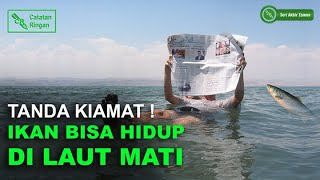 Download Video Tanda Kiamat! Kemunculan Ikan di Laut Mati MP3 3GP MP4