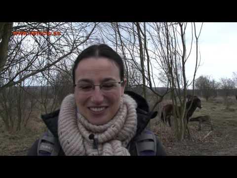 První hříbě divokých koní počaté a zrozené v Čechách