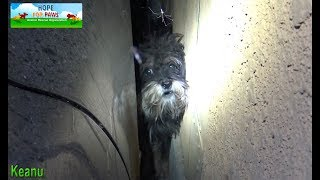 Scared abandoned dog hides in a spot that we couldn't reach, so I had no choice but... by Hope For Paws