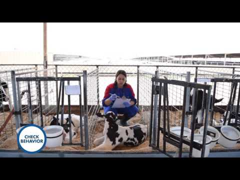 Do You Know How To Manage Calf Scours?