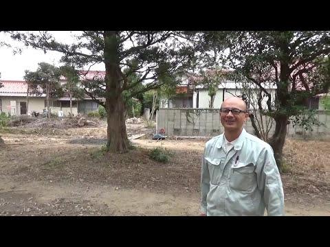 イヌマキ 大きな木 メインツリー takezo・ファーム オリンピック