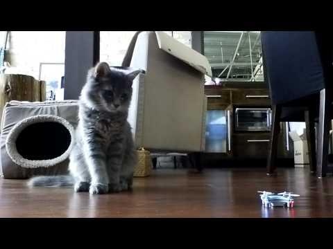 Kitten swats drone