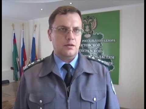 Об уничтожении колбасы запрещённой к ввозу на территорию Российской Федерации