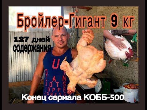 Бройлер-Гигант 9 кг. 127 дней. Конец сериала о КОББ-500. - DomaVideo.Ru