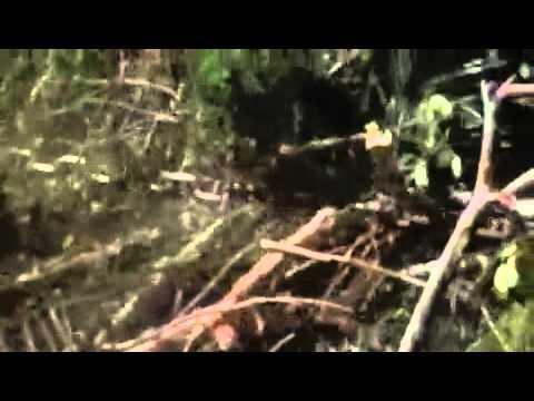 The Emerald Forest - Evolución de la presa