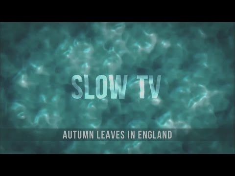 SlowTV - Autumn Leaves in England
