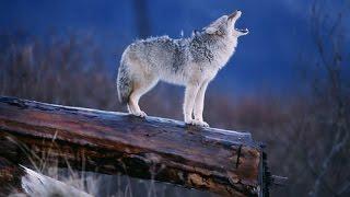 Nature Documentary - Amazing Wildlife of Alaska - Documentary