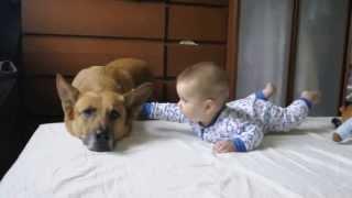 Dziecko i pies – prawdziwy przyjaciel