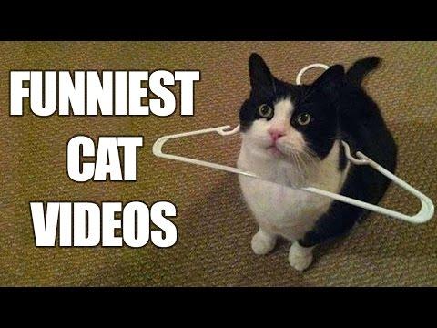 questi gatti si mettono in situazioni buffe