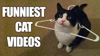 Video Funny Cats Compilation [MUST SEE] Funny Cat Videos 2016 MP3, 3GP, MP4, WEBM, AVI, FLV Oktober 2018