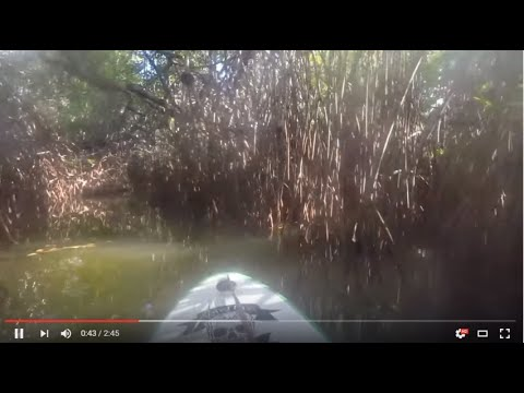 Paddling through the mangrove tunnel