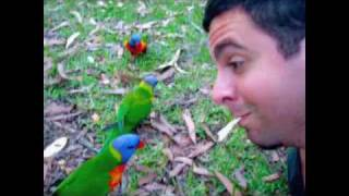 Jervis Bay Australia  City pictures : Playing w/ Australian Animals: Jervis Bay Australia