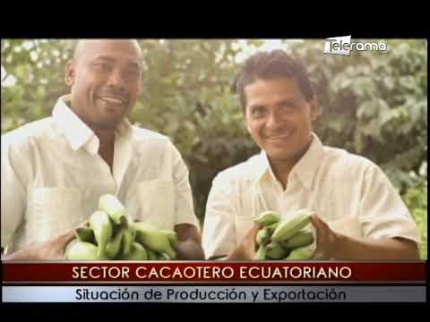 Sector cacaotero ecuatoriano situación de producción y exportación