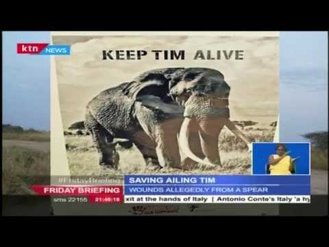 Saving Kenya's oldest Elephant Tim from poachers at the Amboseli National Park