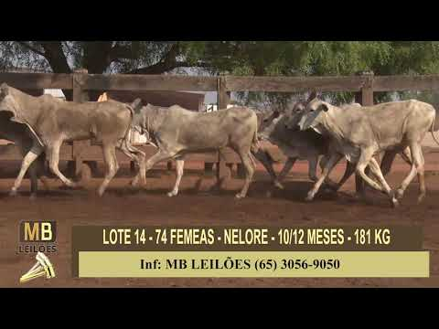 311º LEILÃO VIRTUAL MB LEILÕES