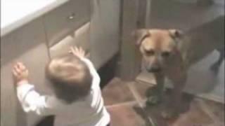 Perro le salva la vida a un bebe