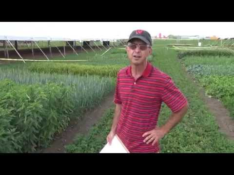 Cover Crops: 16 demonstration plots and their seed mixes