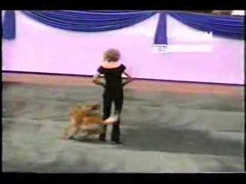il-cane-che-balla-grease