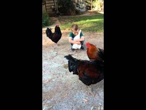 看了這則影片才知道原來人類跟雞的感情是如此深厚…