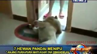 Video On The Spot - 7 Hewan Pandai Menipu MP3, 3GP, MP4, WEBM, AVI, FLV Mei 2018