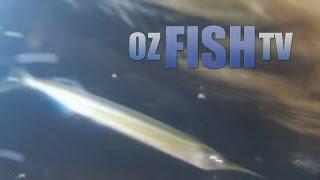 Corinella Australia  city images : Oz Fish TV Season 3 Episode 7 - Coronet Bay Garfishing