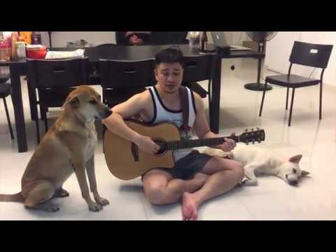 Perfect - Ed Sheeran Cover - Cutest Video Serenading Dogs