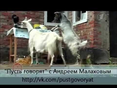 Пусть говорят (анонс на эфир от 06.06.2012) (видео)