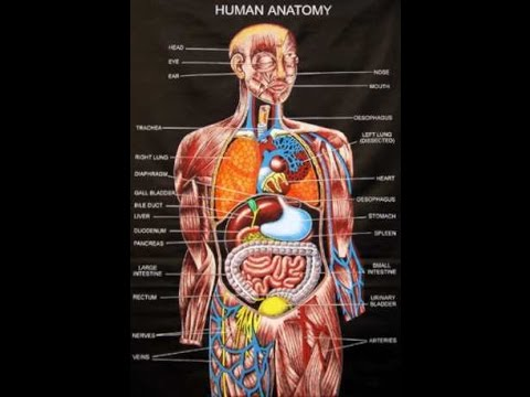 Human Anatomy Picture And Course Review
