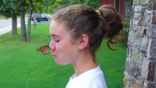 Mount Magazine Butterfly Festival