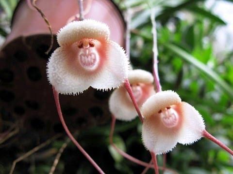 fiori che imitano gli animali