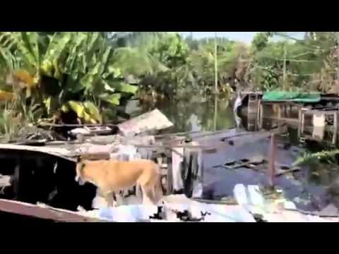 Por Thrisadee joins WSPA Disaster Team during the Thailand floods (видео)