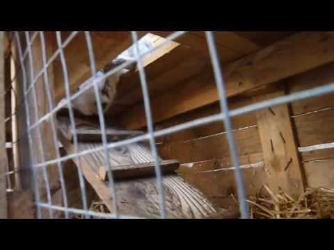 Comment construire une cage a lapin en bois la r ponse est sur - Comment fabriquer une cabane pour lapin ...
