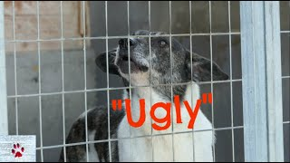 Ugly   Unwanted dog has spent 6 years in the shelter by The Orphan Pet
